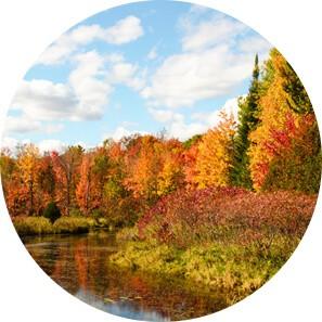 fall trees circle