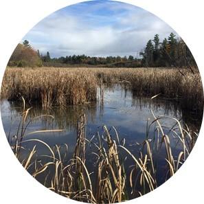 lake area circle